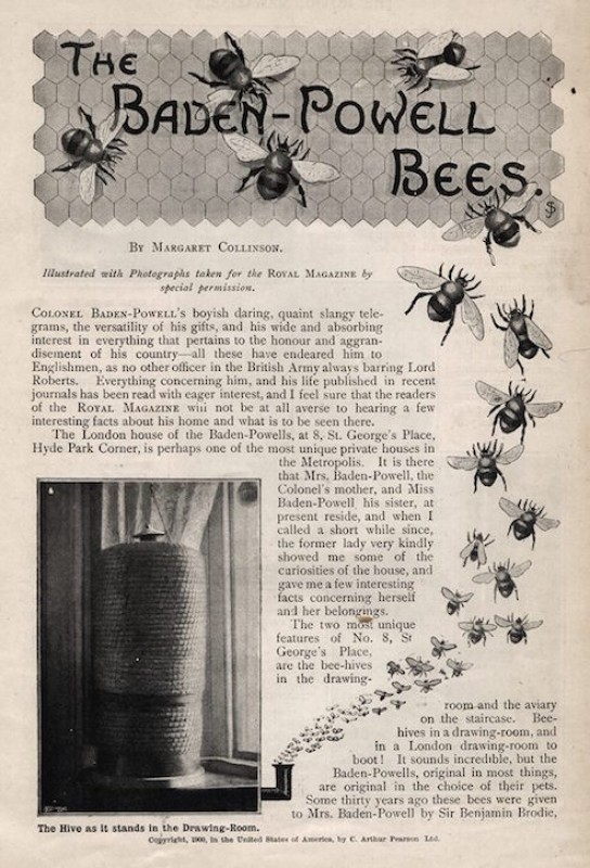 'The Baden-Powell Bees', 1900